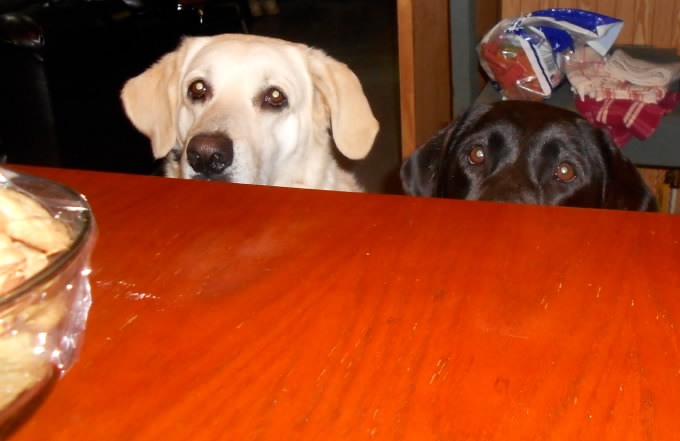 Sadie and Magoo with their eyes on Shirley's delicious cookies.